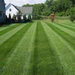 Perfect Stripes and Manicured Lawn