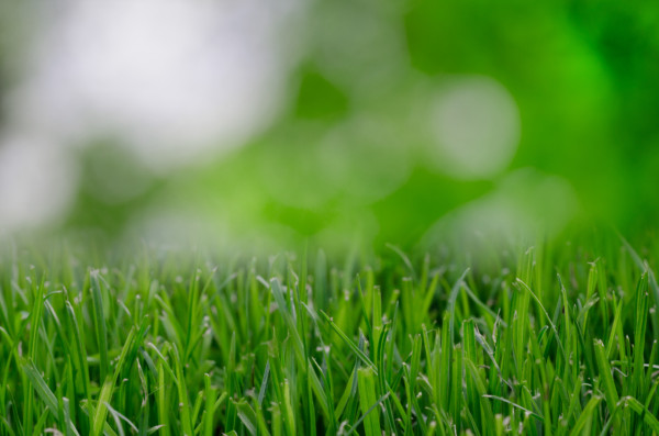 lawn care company, local lawn care, best lawn care, akron canton lawn care, local business, fertilizer company, fertilization company, weed control company