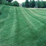 copley ohio, copley oh lawn care, akron canton lawn care, weed control company, fertilization services