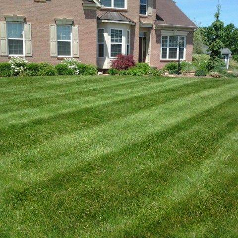 lawn fertilization, lawn fertilizer, lawn treatments, akron canton lawn care, lawn service, local lawn care, weed control, grub control, crabgrass, dandelions